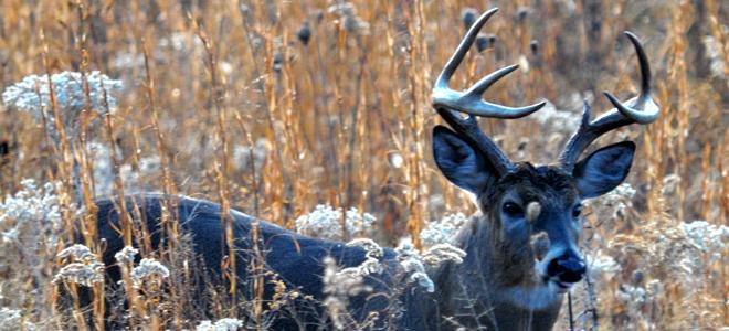Deer farm oversight moves to Dept. of Agriculture after reversal of legislature