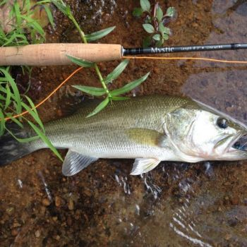 Flyfishing for bass is good on the Neuse River, especially for anglers who follow EJ Stern's tips.