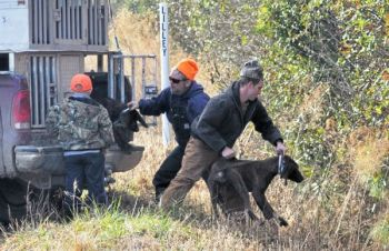 Hunters get ready to toss hounds across a deep ditch so they can join the chase.