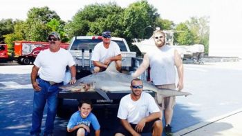 Anglers pose with new South Carolina state record spinner shark, caught out of Little River.