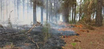Winter is the perfect time for prescribed burns to generate native growth and improve wildlife habitat.