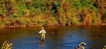 A trout fisherman casts a fly on the delayed-harvest section of the Tuckaseegee River in Jackson County.