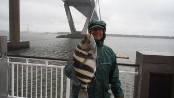 Cold weather is no deterrent to sheepshead, which are biting around the pilings of the Mt. Pleasant Pier.