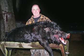 The author killed this wild hog after dark thanks to less-restrictive regulations put in place by the S.C. Department of Natural Resources.