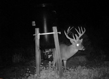 Trail cameras set up around supplemental feeding locations during the winter when natural food available is at its lowest ebb can give hunters a great idea about how many and which bucks survived the previous season.
