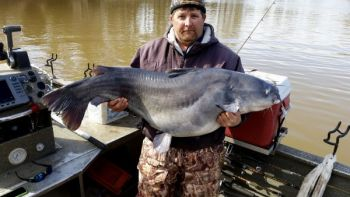 While fishing with Capt. Robbie Burr of Pee Dee Fishing Adventures, Craig Bennett caught and released this 70-pound blue catfish at Blewett Falls Lake.
