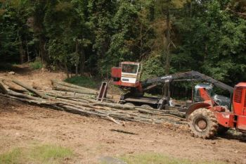 Wise timber management is often just what the doctor ordered to improve local wildlife habitat.