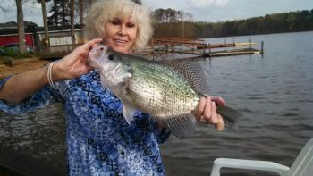 Lorene Smith of Rockwell caught and released this white crappie on High Rock Lake. The fish weighed several ounces more than the current state record, but Smith's fish was not certified by the NCWRC.