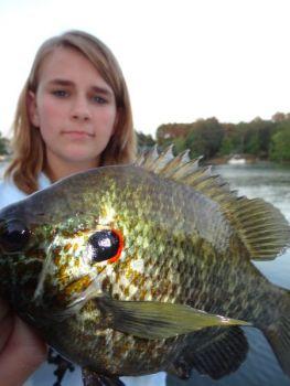 Lake Marion is perfect shellcracker habitat - Carolina Sportsman