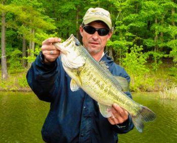 How to catch lake gaston 39 s bass in may carolina for Lake gaston fishing