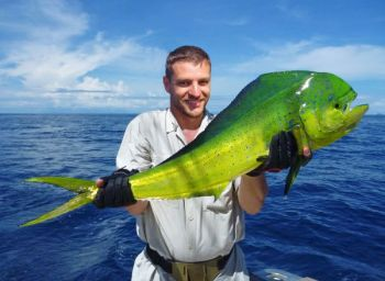 Lots of offshore species, including mahi mahi, are biting off the coast of the Palmetto State.