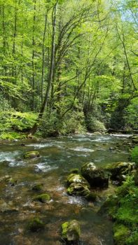 The upper section of the Oconaluftee River in the Great Smoky Mountains National Park offers some beautiful scenery.