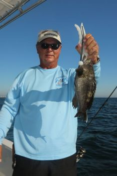 The recreational black sea bass season opens on May 15 in state and federal waters north of Cape Hatteras.
