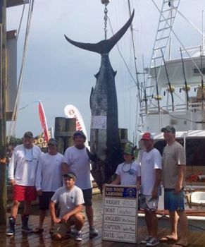 Gryphon brought in the lone blue marlin on day 3 of the 2016 Big Rock Blue Marlin Tournament.