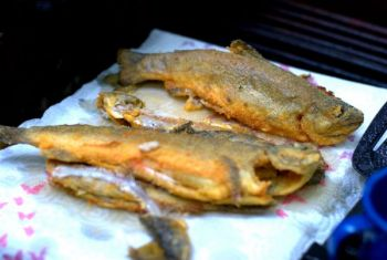 Fried, baked or grilled, trout are easy to prepare and easy to cook.