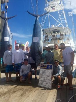 Viking 72 brought this blue marlin to the scales on day 5 of the Big Rock Tournament.
