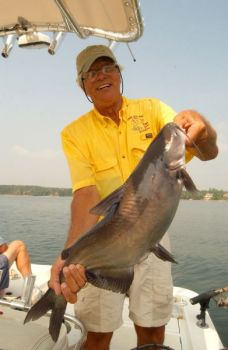 Gus Gustafson said nice blue catfish dominate the landscape at Lake Norman once summer arrives.