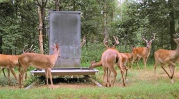Language inserted into the 2016 Farm Bill by Rep. Roger West (R-Cherokee) would have cost N.C. sportsmen extra fees for deer feed and given the money to the N.C. Deer and Elk Farmers Association. Action by sportsmen�s groups defeated the proposal.