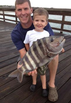 Sheepshead are often caught around pier pilings, but they're a tough species to hook.