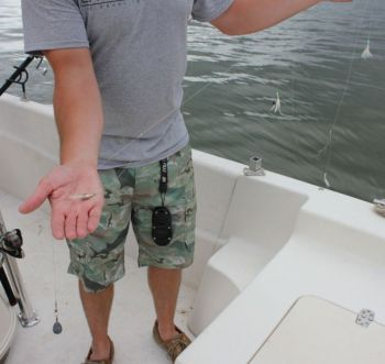 A Sabiki rig, with multiple tiny lures, is a fish-catching machine, especially for anglers who need white perch for catfish bait.