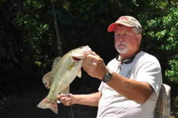 Nice largemouths, like this chunky specimen landed by Lee Lanier, are becoming more plentiful in the Neuse River.