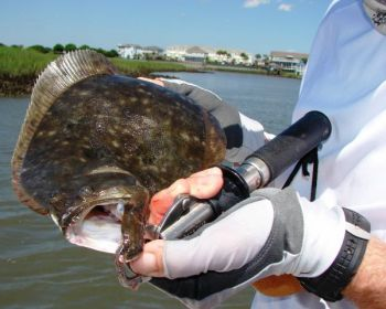 The marshes, creeks and bays of lower Brunswick County are full of flounder as the weather warms.
