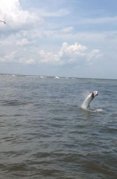 Some of the best places to target summer tarpon are the sloughs around Frying Pan Shoals off Bald Head Island.