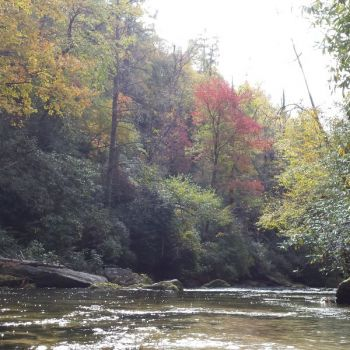 Flowing for 52 miles through North Carolina, South Carolina and Georgia, the Chattooga is one of the nation's Top 100 trout streams.