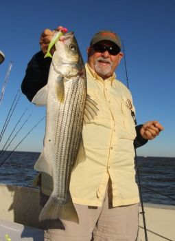 Striped bass are dying in bigger-than-normal numbers on Lake Murray, and biologists believe it is due to a number of factors.