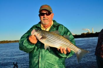 If a school of stripers you're working has only small fish, fish deeper or look for another active school to find bigger fish.