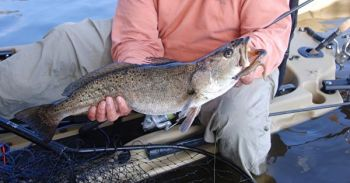 Speckled trout can be a great target for kayak-bound anglers during the fall.