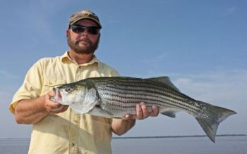 Guide Joe Dennis expects to catch plenty of keeper striped bass when the seasons opens Oct. 1 on the Santee Cooper lakes.