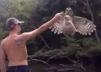 This still-shot shows a barred owl snatching a bream from Cody Taylor near Savannah, Ga. last month. LDWF ornithologist Michael Seymour said the bird was likely young an inexperienced, or just very hungry and saw the opportunity for an easy meal.