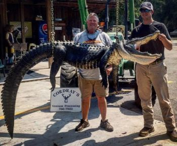 Todd Walters (left) and Patrick Walters (right), both well-known as top-notch bass anglers, became gator hunters on Sept. 11, killing this Cooper River beast that measured over 10 feet long.
