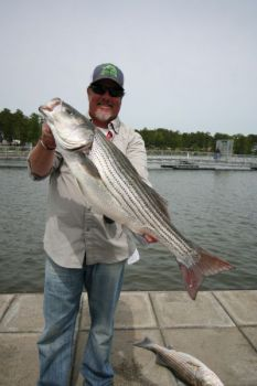 In the last part of October, Tony Shepherd keys on baitfish schools to find the stripers and hybrids on Clarks Hill Lake.