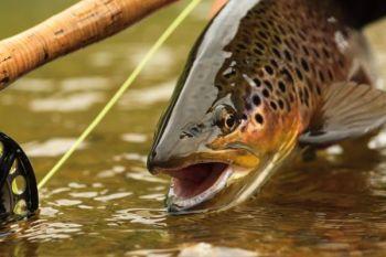 Bryson City will host the Smoky Mountain Fly Fishing Festival this Saturday, Oct. 8.
