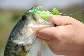 A vibrating jig is a great tool bass fishermen should have in their tackle boxes when November rolls around.