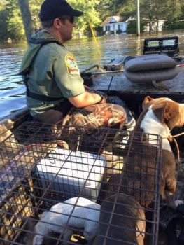 During the flooding after Hurricane Matthew, SCDNR officers rescued many pets and farm animals.