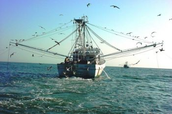 The N.C. Wildlife Federation is pushing for N.C. to impose the same inshore trawling laws as its neighboring states.