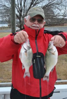 Lake Wylie often produces chunky white perch up to 2 pounds, but most are far smaller.