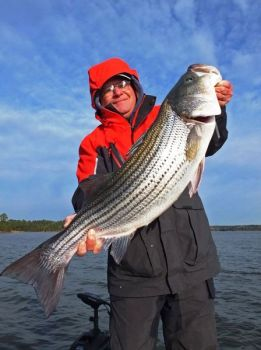 Take a trip to South Carolina's Lake Richard Russell this month for trophy stripers.
