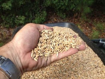 A mixture of food-plot seeds will provide forage that matures at different times and extends the planting's effectiveness.