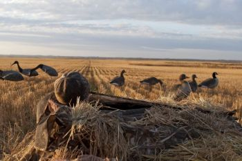 A layout blind offers goose hunters plenty of concealment when hunting fields.