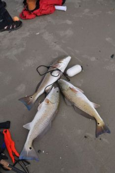 A day's limit of slot redfish for three fishermen goes a long way toward a full frying pan and tasty meal.
