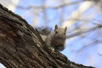 Squirrels can sit still for long periods of time when sensing danger. Stay still and quiet, and they'll forget you're there.