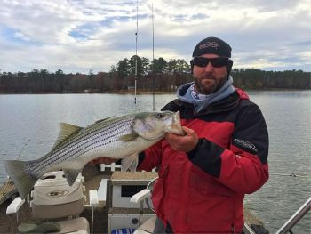 Chip Bragg prefers a better than hand-sized gizzard shad to weed out bites from smaller stripers.