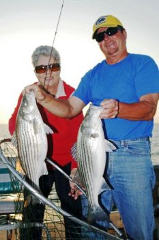Striped bass will begin their spawning run to the upper end of Lake Marion and into the Wateree and Congaree rivers this month.
