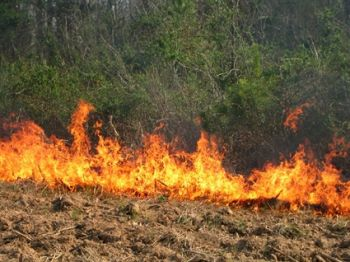 Prescribed burns are beneficial in many ways, and the NCWRC conducts these intentional burns on close to 2 million acres of state game lands.