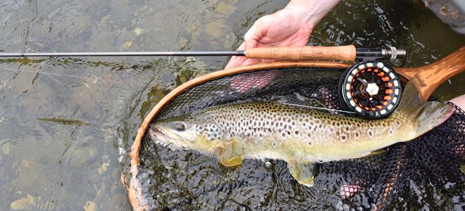 North carolina sportsman north carolina fishing reports for North carolina trout fishing