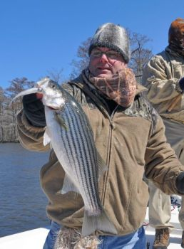 Striped bass don't mind cold water. They feed in the Neuse and Trent rivers around New Bern throughout the winter.